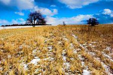 Free Winter - Spring Meadow Stock Photos - 557273