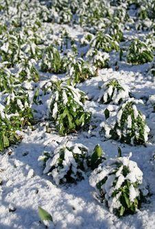 Free Snow Stock Photos - 557283
