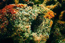 Free Many Sea Anemone Stock Image - 557821