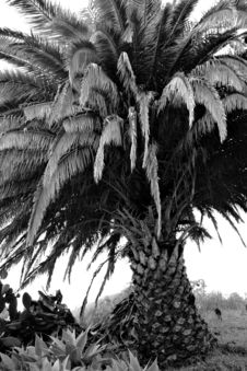 High-contrast Palm Tree Stock Images