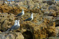 Seagulls On Craggy Rocks