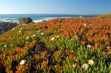 Free Springtime Coastal Meadow Royalty Free Stock Images - 558129