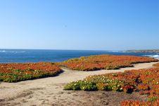 Free Springtime Coastal Meadow Royalty Free Stock Image - 558136