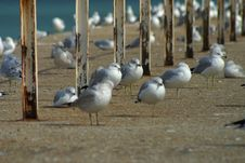 Free Seagulls On Urban Pier Stock Images - 558314
