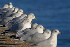 Seagulls On Pier Royalty Free Stock Photography