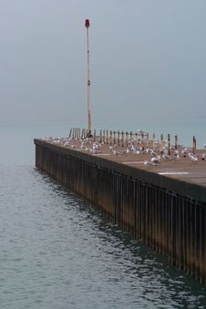Seagulls On Rainy Pier Stock Photo