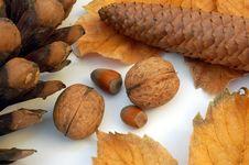 Free Autumn Stock Image - 558641