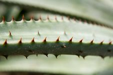 Free Thorns Stock Photo - 558890