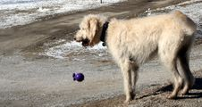Free White Dog Stock Photography - 559132