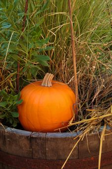 Free Pumpkin 5 Stock Images - 559204