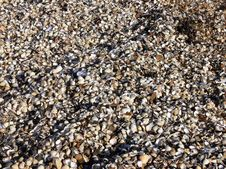 Free Shells Stock Image - 559391