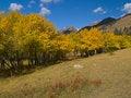 Free Aspen Meadow Royalty Free Stock Photo - 5500205