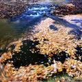 Free Autumn Stock Photos - 5500613