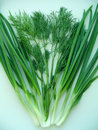 Free Sheaf Of Green Dill And Onion Royalty Free Stock Photography - 5503167