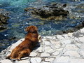 Free Dog By The Sea Stock Photography - 5503762