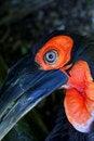 Free Eye Of A Bird Stock Photography - 5503982