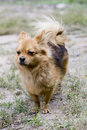 Free A Docile Dog Stock Images - 5504554