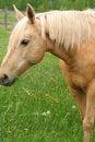 Free Horse Enjoying The Grass Royalty Free Stock Photo - 5506875