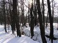 Free Winter Wood Stock Image - 5507371