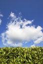 Free Blue Sunny Summer Sky Royalty Free Stock Photo - 5508105