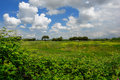 Free Roman Countryside With Cumuli Clouds Royalty Free Stock Photo - 5508785