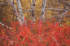 Free Autumn Stock Images - 5500824