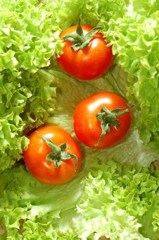 Free Fresh Salad With Tomatoes Royalty Free Stock Photos - 5500898