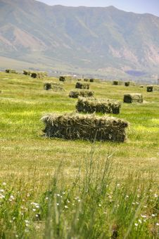Free Bale Of Hay Stock Photo - 5501110