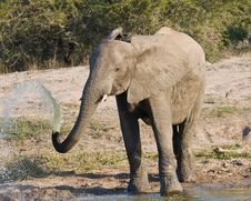 Free Elephant Squirting Water Stock Photo - 5501370