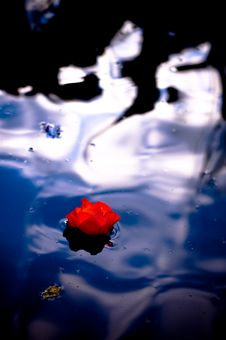 Free The Red Flower On The Pond Stock Photo - 5501800