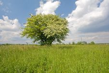 Free Lonely Tree On Meadow Stock Photos - 5502193