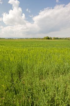 Free Meadow In The Spring Stock Photos - 5502253