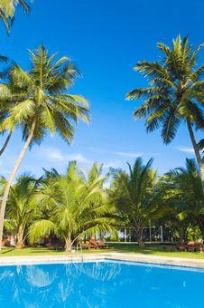 Free Tropical Beach Royalty Free Stock Photo - 5502385