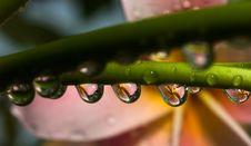 Liquid Floral Beads Stock Photos