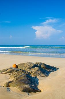 Free Tropical Beach Royalty Free Stock Image - 5503116