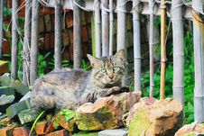 Free Cat Royalty Free Stock Photography - 5503197