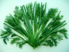 Free Fan Of Green Dill And Onion Stock Photo - 5503290