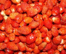Free Strawberries Background Stock Photography - 5503742