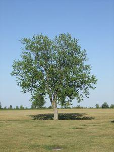 Free Tree Royalty Free Stock Image - 5503916