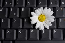 Free Keyboardflower Stock Photography - 5504972