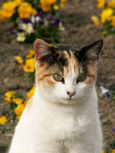 Free Green-eyed Cat Stock Images - 5504984