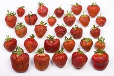 Free Strawberry Fields Royalty Free Stock Photography - 5505107