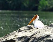 Free Painted Stork Stock Photos - 5505453
