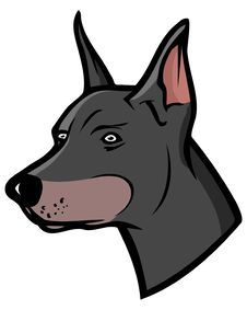 Free Doberman Stock Images - 5506014