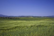 Free Val D Orcia Stock Images - 5506214