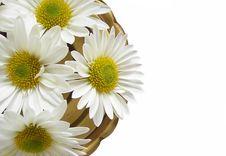 Free Daisy Circle Stock Image - 5506321