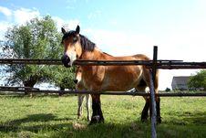 Free Big Horse Stock Photography - 5506432