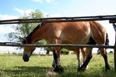 Free Big Horse Royalty Free Stock Images - 5507039