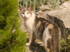 Free Cat In Natural Environment Looking Back Stock Images - 5507704