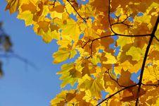 Free Leafs On Tree Stock Image - 5507971